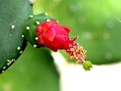 conseguirbajardepeso.wordpress.com niveles de glucosa y extracto de cactus